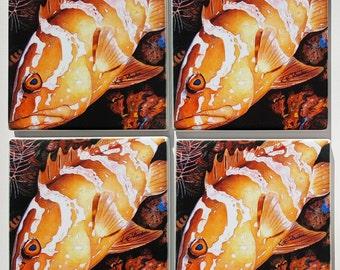 Nassau Grouper Sandstone Coaster set of 4 fishing gift box included offshore sportfishing