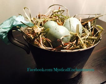 Spring Birds nest with spotted eggs in a Vintage tin cup
