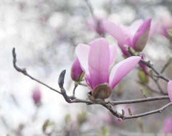 Magnolia Print, Magnolia Photograph or Canvas Art, Pink Flower Photography, Cottage Chic Decor, Floral Photography, Spring Flower Photo