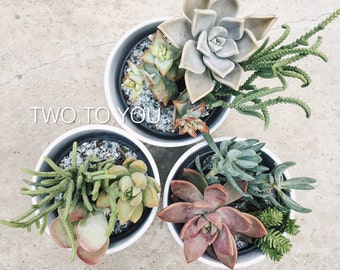 SPECIAL - Two To You Succulent Arrangements