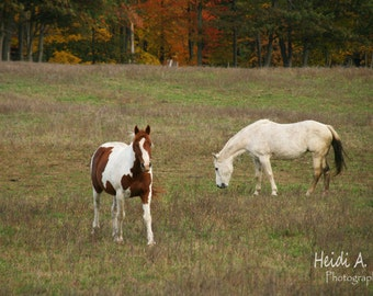photo card, photo note card, blank card, horse photo card, photography, Stationary, greeting card, Horse card, Horse note card, Horses
