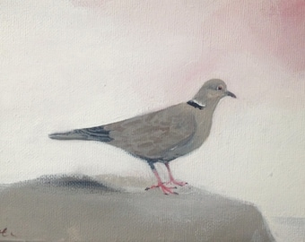 "Collared dove, painting 7"" x 5"""