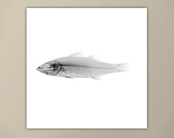 Black and White Fish X-Ray Print, Marine Life Art, Modern Art Print, Square Print, Fish Xray, Minimalist Art Print, Custom Sizes Available
