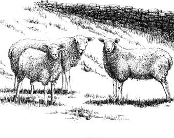 Sheep drawing,sheep art, black and white art, sheep print,farm animal art, animal prints, sheep in meadow drawing, sheep art