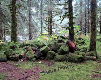 Reclaiming the Forest,  Landscape Photography