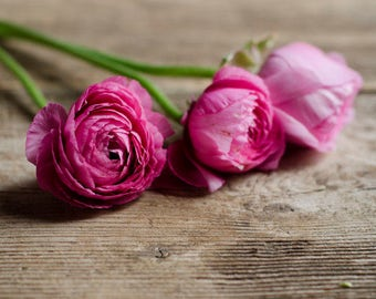 ranunculus art, farmhouse decor, rustic flower art, floral nursery art, romantic floral print, girls room decor, shabby flower print,