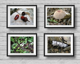 Nature photography, woodland decor, forest prints, photography set, mushroom photo, acorns print, rustic decor, green and brown, horizontal