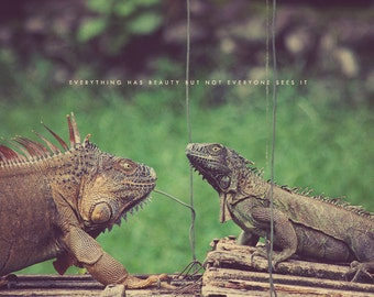 Iguanas Photo, Iguana Art, Iguana Photo, Iguana Photograph, Iguana Gift, Iguana Lover, Iguana Decor, Iguana Picture, Iguana Face Off