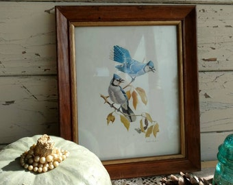 Woodland Vintage Blue Bird Art Vintage Signed Framed Artwork - Retro Blue Jay Print From 1973, OOAK Ornithological Art + Gift, Retro Cabin
