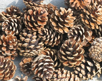 200 ponderosa pine cones smaller sizes christmas crafts fall crafts natural woodland wedding