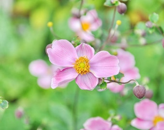 Pink Flower Print, Botanical Wall Decor, Anemone Photograph, Floral Print, Pink, Green, Shabby Chic Art, Laundry Room, Bathroom, Bedroom