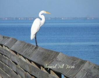 Ocean Bird Photograph DIGITAL Download Wildlife Beach Nautical Decor Graphics Art Crafts Background COMMERCIAL LICENSE