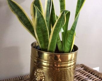 Hollywood Regency brass planter lion head handles