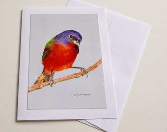 Photo Note Card - Male Painted Bunting