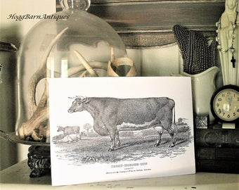 Vintage COW Wood Sign Book Page Illustration Wall Art Print Farmhouse Decor Fixer Upper Decor Short Horned Cow Bull