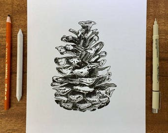 Choose Size-PRINT of Black and White Pine acone Drawing Illustration Woodland Forest Original Art