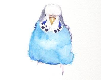 "Blue Budgie Print 6x6"""