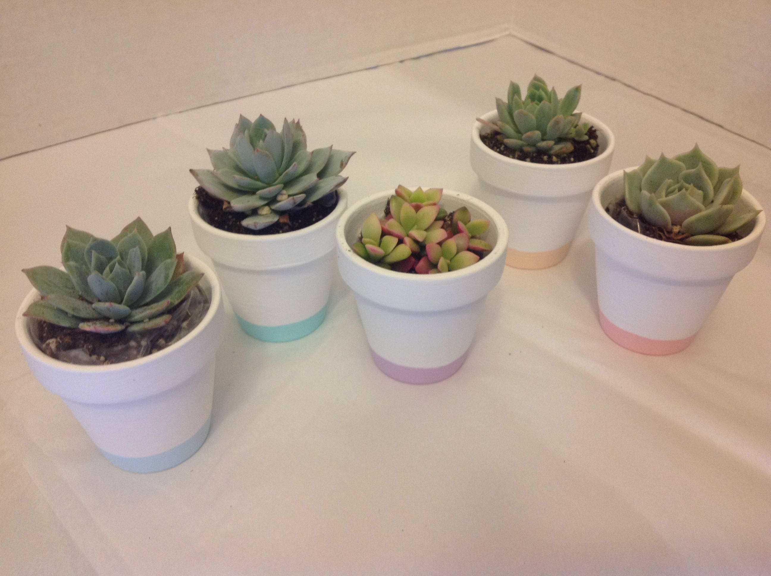 Potted Plant Wedding Favors | Giftwedding.co