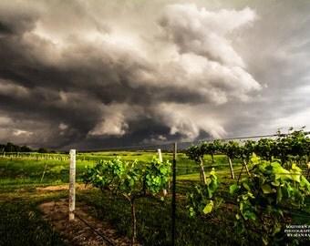 Nebraska, Vineyard Photography, Wine Country, Vineyard Picture, Vineyard Print, Grapevine Print, Vine Photography, Nebraska Print