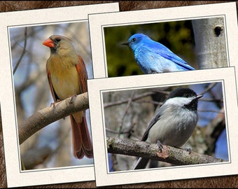 3 Bird Photo Greeting Card Set - Bird Note Card - 5x7 Bird Cards - Blank Note Cards - Bird Greeting Cards Handmade (BD13)