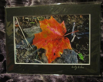 5x7 Matted Print - Don't Leaf Me Here