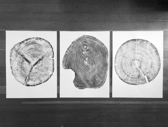 Set of 3 tree ring prints, Triptych Wall Art, Large Tree Rings, Pine tree rings, Cedar Tree rings, Mulberry Tree rings, Nature inspired art