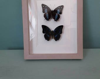 Real butterfly photo frame.