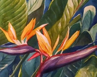 El Salvador Flower- Print by Denise Walter