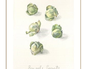 Green PRINT of cabbages  drawing - watercolor and pencil drawing of Brussel sprouts - green still life - Vegetable drawing by Catalina