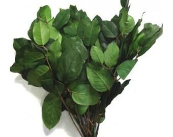 Preserved Lemon Leaf (Salal) - 4-5 oz bunch in Natural Green