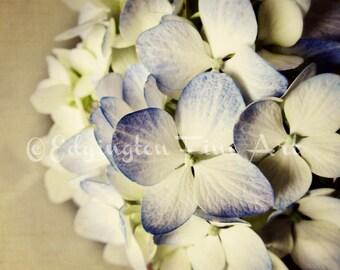 Hydrangea print, Flower photography, Hydrangeas, flowers, springtime, nature, home decor, white, blue, purple, botanical, nature photography