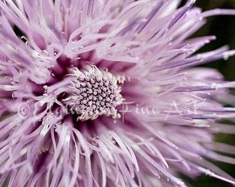 Purple flower photo, close up flower photo, Flower photography, nature art, purple, botanical decor, macro flower photo, purple flower print