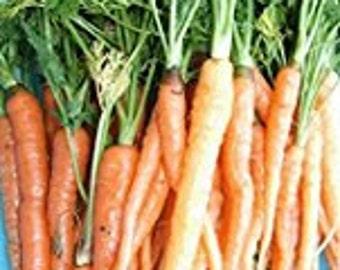 Carrot Seeds, Scarlet Nantes, Non-GMO Carrot Seeds, Non-GMO vegetable seeds