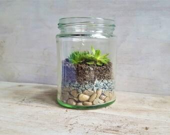 D.I.Y Terrarium / Sempervivum / Succulent gifts / wedding favours
