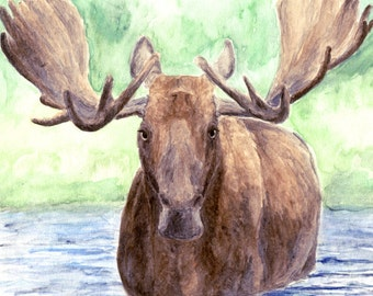 MOOSE PRINT - moose art, moose painting, wildlife artwork, animal painting, moose watercolor, moose art, Vermont, New England, Maine