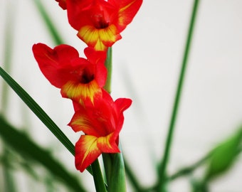 Five red and yellow flowers - Nature photography print