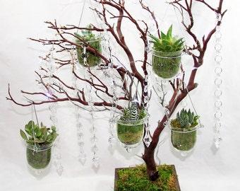 Air Plants/Succulent Manzanita Tree Wedding Centerpiece/Home Centerpiece