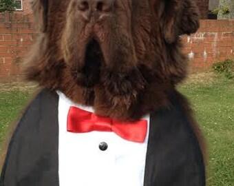 Big dog slobber bib tuxedo dress bib