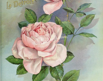 seeds_catalogs-04052 - Rose vintage picture JPG image rosa printable digital download bouquet plant Pink wild thorn two burgeon bud bourgeon