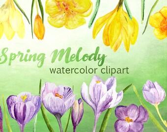 Spring Melody - Watercolor Clip Art - Crocuses