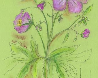 West Virginia Wildflower Wild Geranium