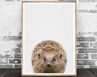 Hedgehog Print, Nursery Animal Decor, Animal Print, Hedgehog Art, Nursery Wall Art, Woodland Animal Print, Photography, Digital Print Art