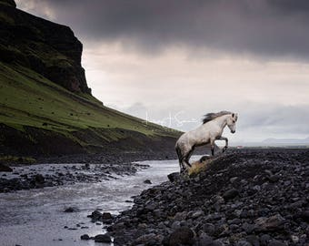 Where there is no path - Horse Photography (Equine Fine Art Print)