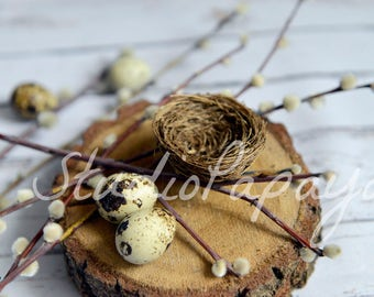 Wood Bird Nest background, Easter Digital Backdrop, Quail eggs Easter Photography, Simple Easter Nest