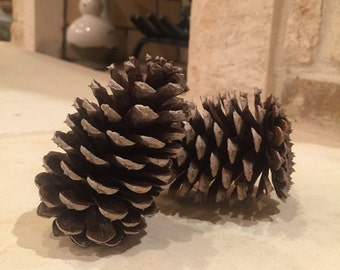 Texas Pinecones