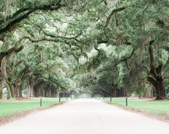 Avenue of Oaks at Historic Boone Hall Plantation Print