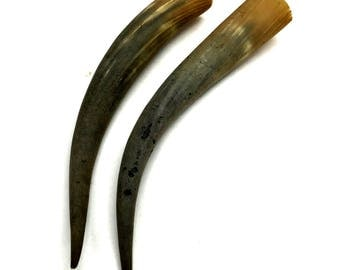 """Matched Pair of Extra Long Steer Horns, Bull Horns, 21.5"""", Vintage Taxidermy"""