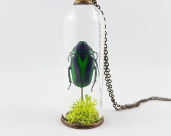 Scarab Beetle Terrarium Necklace,Specimen Jewelry,Insect Specimen,Insect Necklace,Terrarium Jewelry,Scientific Gift,Jewel Beetle,Entomology