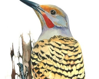 Limited Edition GICLEE MINI Print / Watercolor Painting of a Northern Flicker