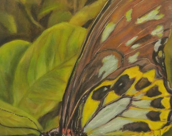 Butterfly leaves insect Giclee CANVAS PRINT of original oil painting by Sandra Cutrer Fine Art